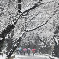 Winter wonderland: Students walk under snow-covered trees in a park in Tokyo on Friday. The metropolitan area was expecting as much as 10 cm of snow.   | AFP-JIJI