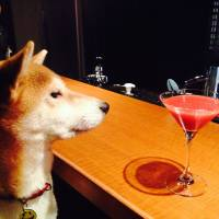 Share a premium cocktail with man's best friend