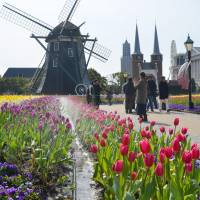 Different-colored tulips grace the Huis Ten Bosch resort and theme park in the city of Sasebo, Nagasaki Prefecture. | KYODO