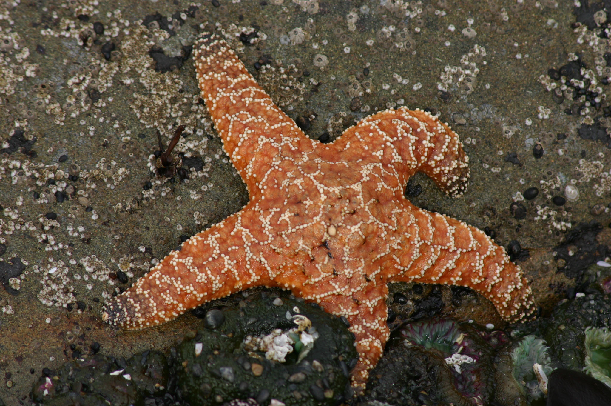 A purple sea star | WING-CHI POON