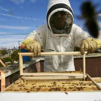 Los Angeles to give bees legal status in residential areas