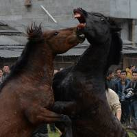 Chinese horses clash in battle to mark Lunar New Year