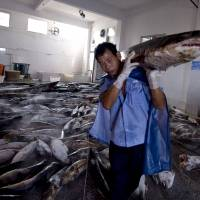 Overfishing: A Chinese worker carries a slaughtered shark at a processing factory in Pu Qi, Zhejiang province. | AFP-JIJI