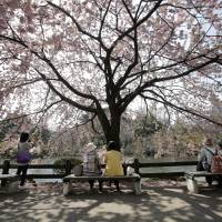 Visitors sit under a cherry blossom tree at Shinjuku Gyoen park in Tokyo on Tuesday.  | AP