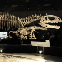 Dinosaur-killing bang acidified seas