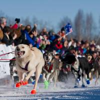 Iditarod sled dog race begins as mushers take off in Alaska