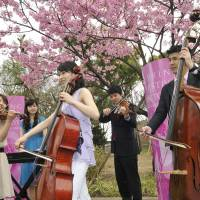 Seasonal notes: Musicians perform in Ueno Park as part of the Spring Festival in Tokyo . | RIKIMARU HOTTA