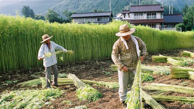 Cannabis: the fabric of Japan