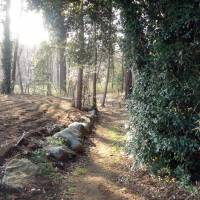 A path leading from Hachiman Shrine. | MARK SCHILLING