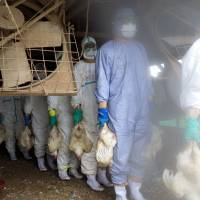 Kyushu farmers on alert after bird flu resurfaces