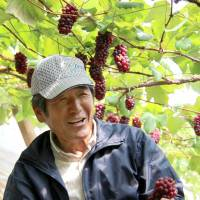 Yamanashi grape crop resilient after snow