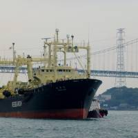 The Nisshin Maru returns to Shimonoseki, Yamaguchi Prefecture, on Saturday. | KYODO