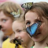 A girl looks at photographers as a large butterfly lands on her face, as she and other children take part in an new exhibition on tropical butterflies outside the Natural History Museum in London on March 31. According to British government statistics, more than a million children in England do not use English as their first language. | AP
