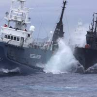 The Bob Barker (right), a ship belonging to anti-whaling group Sea Shepherd, and the Japanese whaling ship Yushin Maru No. 3 collide in waters off Antarctica in February 2010. | AP