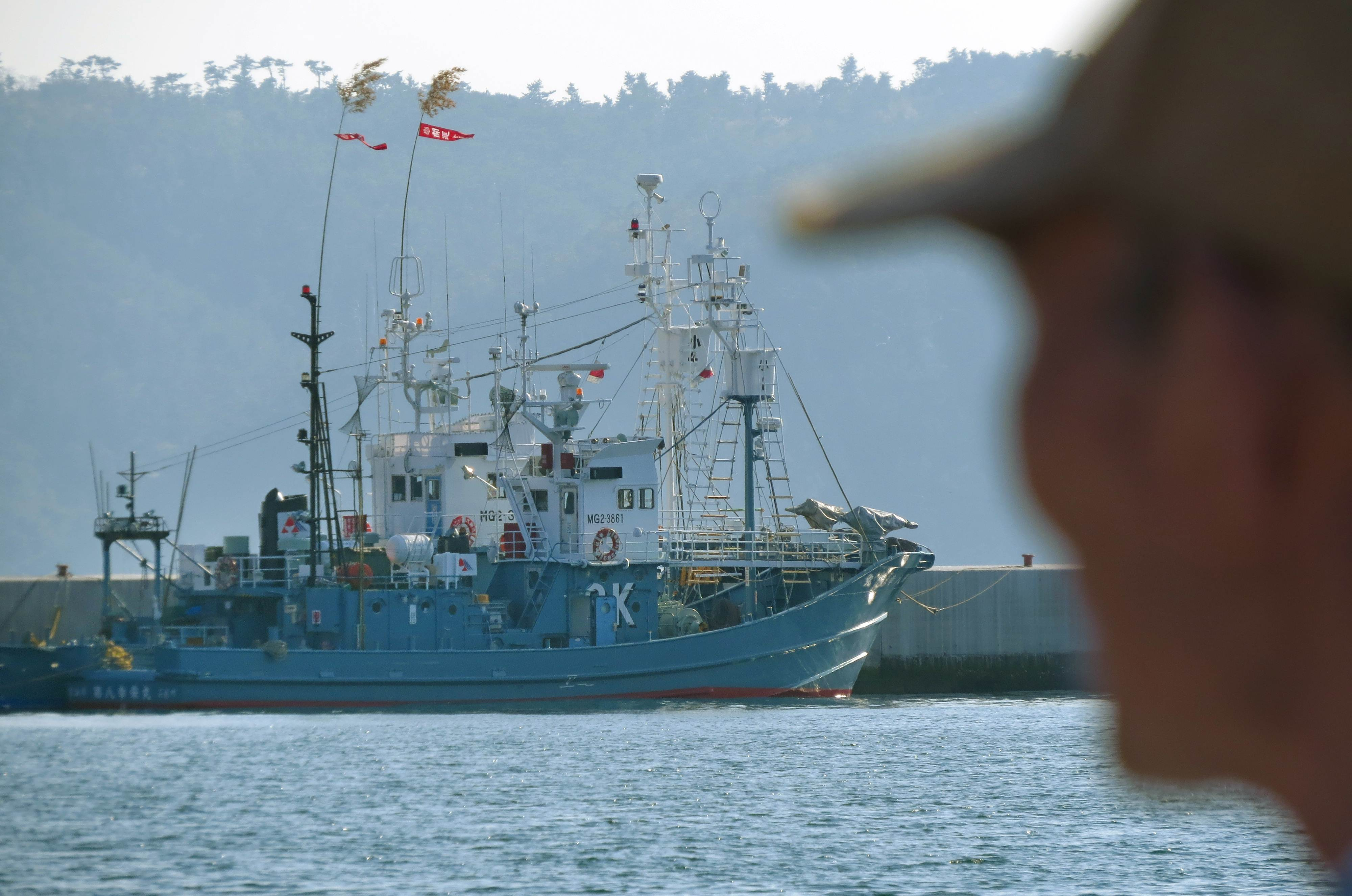 japan launches whale hunt since icj ban the japan