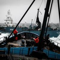 Government plans to resume 'research whaling' in 2015