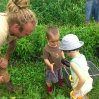 Starting young: Dennis van den Brink picks eggplants with some children at Niseko Green Farm.