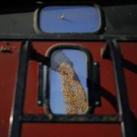 Susceptible to weather: A combine harvester deposits corn into a trailer in Shelbyville, Kentucky, in October. | BLOOMBERG