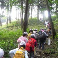 Living legacy: Students take a trip around Sanden Forest, opened in 2002 alongside the Sanden Corp. Akagi Industrial Plant as a way to offset the effects of the factory on the environment, and the jewel in the company's corporate social responsibility program. | C.W. NICOL