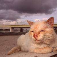 Couple care for Tama cats cast off by society