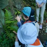 A boy looks at fern fronds with a magnifying glass. | CHIHO IUCHI