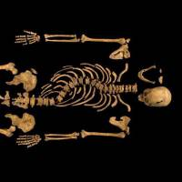 The remains of England's King Richard III, found beneath a Leicester parking lot in 2012, are to be reburied in the city's cathedral after the High Court dismissed a petition that he be entombed in the city of York. | AP