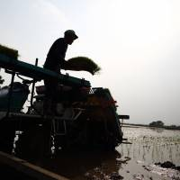 A farmer stands on a transplanter while preparing rice seedlings in a paddy in Saitama Prefecture on Sunday. | BLOOMBERG