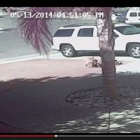Video captures family cat saving California boy from dog attack