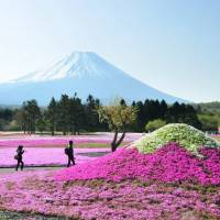 Sightseers enjoy a view of Mount Fuji last month from a garden near Lake Kawaguchi in Yamanashi Prefecture that features its own miniature version of the mountain. | KYODO