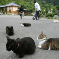 Cats get the cream at Fukui temple