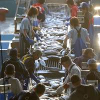 Workers sort fish Monday in the recovering city of Kesennuma, Miyagi Prefecture. | KYODO