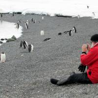 Scientists warn of tourism threat to Antarctica