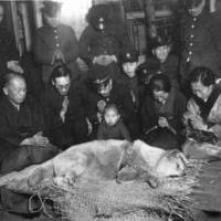 Every dog has its day: The funeral of Hachiko, Japan's beloved loyal canine, in 1935.