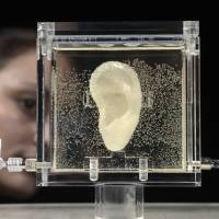 German museum grows, displays 'living' van Gogh ear