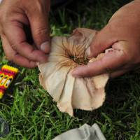 Gordon Yellowman opens a bag of sweet grass, one of several herbs that he uses in the sun dance rituals. | REUTERS