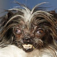 U.S. mutt abused as a puppy wins title of World's Ugliest Dog