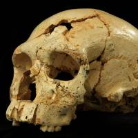 Game of bones: Discovery of early human remains points to intense competition among ancestors