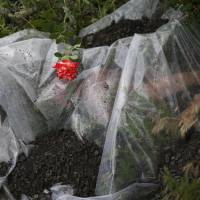 A rose lies on a plastic sheet covering a victim of Malaysia Airlines Flight MH17 on Friday near the village of Rozsypne in eastern Ukraine. The Boeing 777 was shot down Thursday, killing all 298 people on board. REUTERS | REUTERS