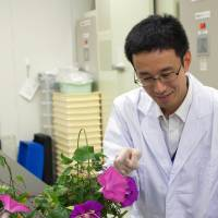 Kenichi Shibuya, a researcher at the National Agriculture and Food Research Organization in Tsukuba, Ibaraki Prefecture, shows off a morning glory at his laboratory on Wednesday. The plant's flowers stayed open for 24 hours. | KYODO