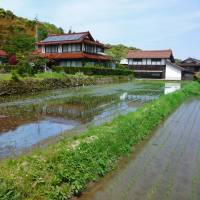 Tranquil rice farms in rural Yakumo, an area for traditional papermaking. | MARK BRAZIL