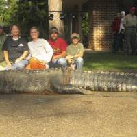 Alabama hunters haul in 450-kg gator