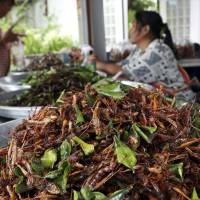 For some Thai farmers, insects become cash crop