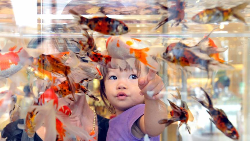 A child watches goldfish swim in a tank at Mitsukoshi department store in Tokyo's Nihonbashi district on July 20.