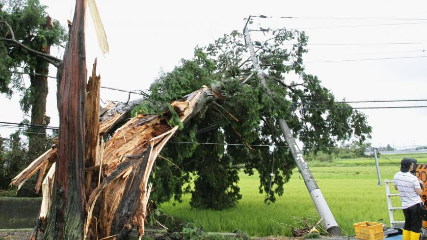 A tree torn down by a gust from Typhoon Halong rests on power lines in Mibu, Tochigi Prefecture, on Sunday.
