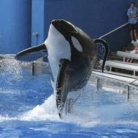 SeaWorld to build new, larger killer whale environments