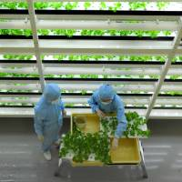 Future appears bright for indoor veggie farms