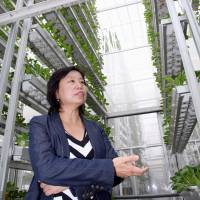 High-tech vegetable farms grow up