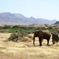 Finding elusive elephants on Namibia safari