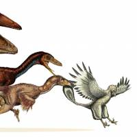 Study traces dinosaur evolution into early birds