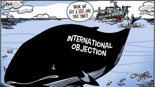 Whale Condemnation